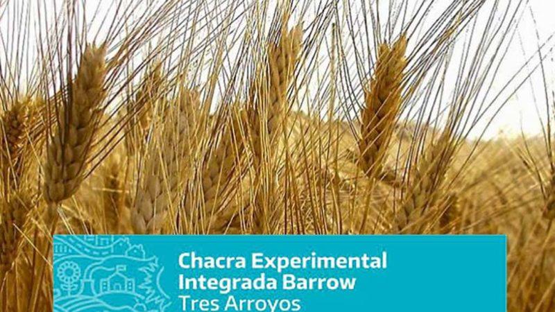 Charla virtual sobre trigo candeal organizadas por la Chacra Barrow