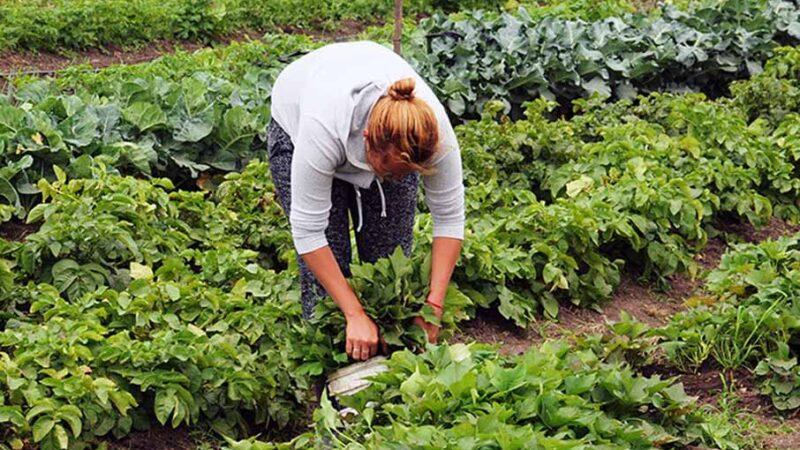 Las claves para tener éxito en el cuidado de los cultivos a través del control biológico