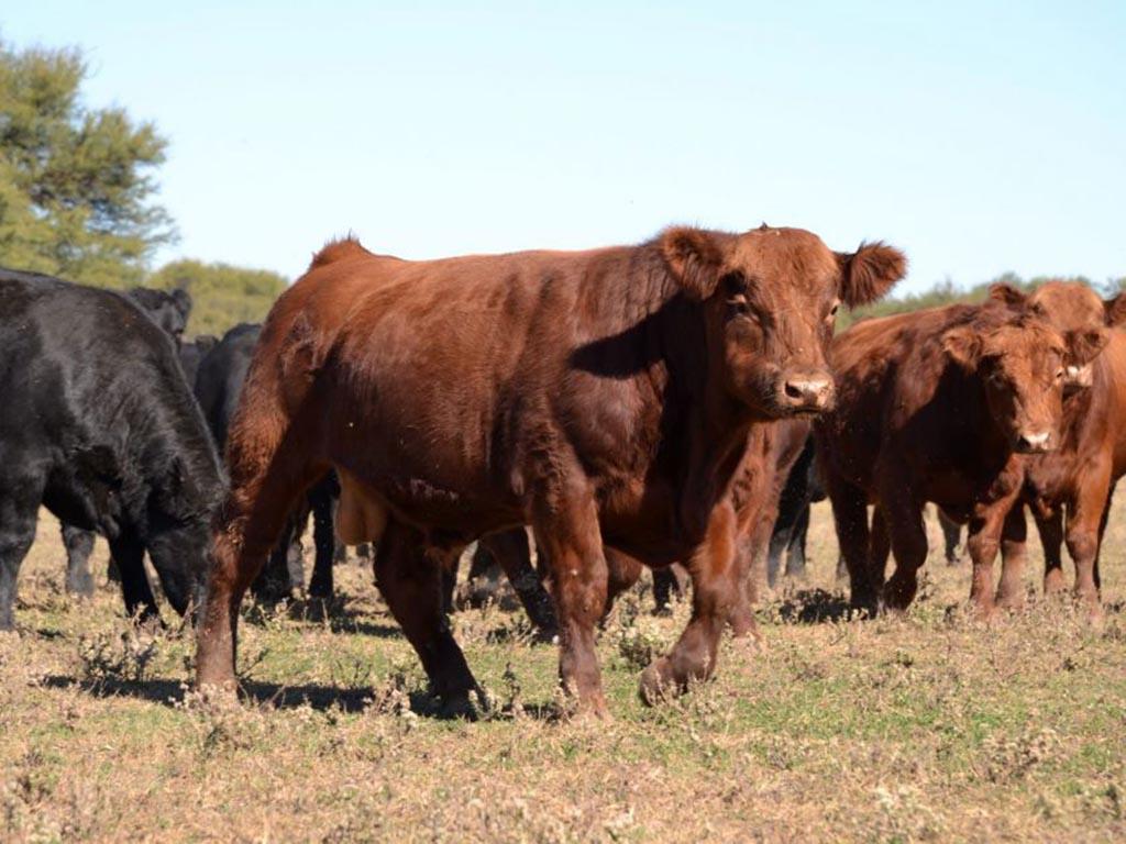 Presentan laboratorios donde se realizarán testeos gratuitos a toros
